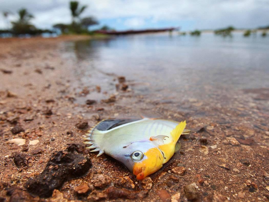 ? детально разбираем, к чему снится рыба — толкование сна в различных сонниках | увидеть во сне рыбу, к чему это?