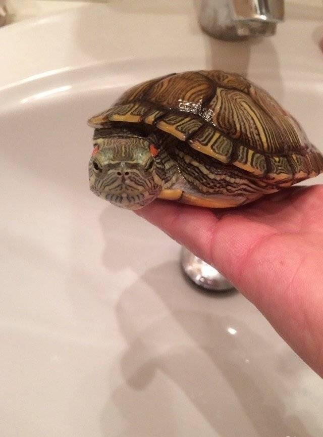 Как ухаживать за черепахами в домашних условиях