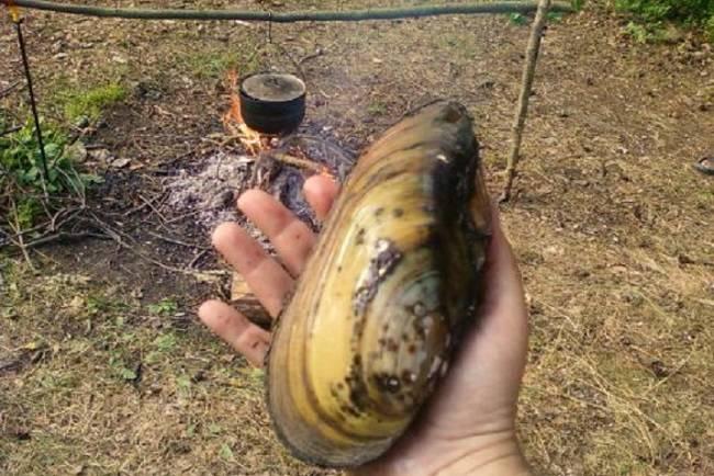 Ловля рыбы на перловицу