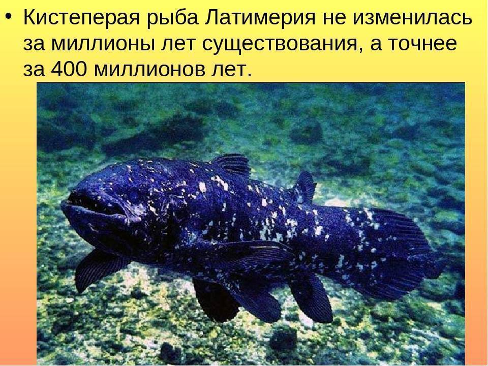 Латимерии - вики