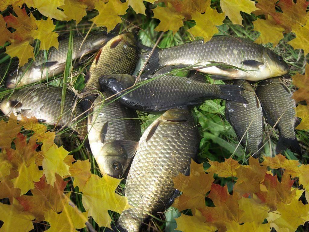 Ловля на фидер осенью в сентябре, октябре, ноябре