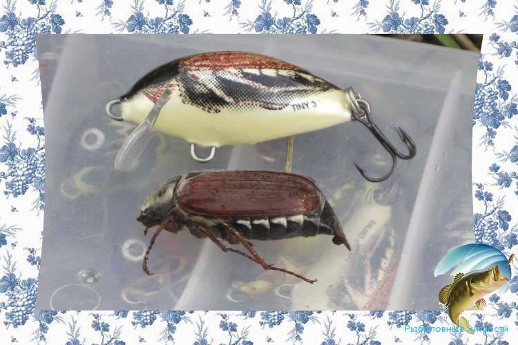 Рыбацкие секреты ловли голавля на майского жука
