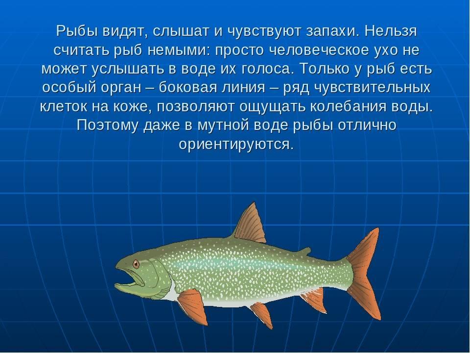 Мир глазами аквариумной рыбки - подводный мир