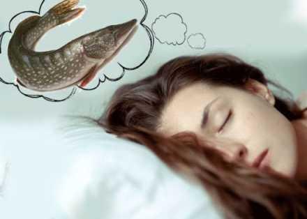 Счастье или неудача: к чему снится живая и мертвая рыба