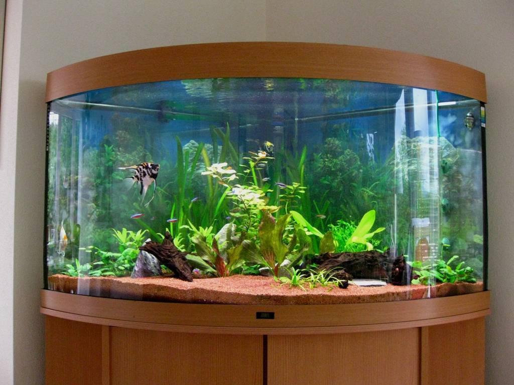 Как выбрать аквариум для дома- подбор аксессуаров, фото и видео