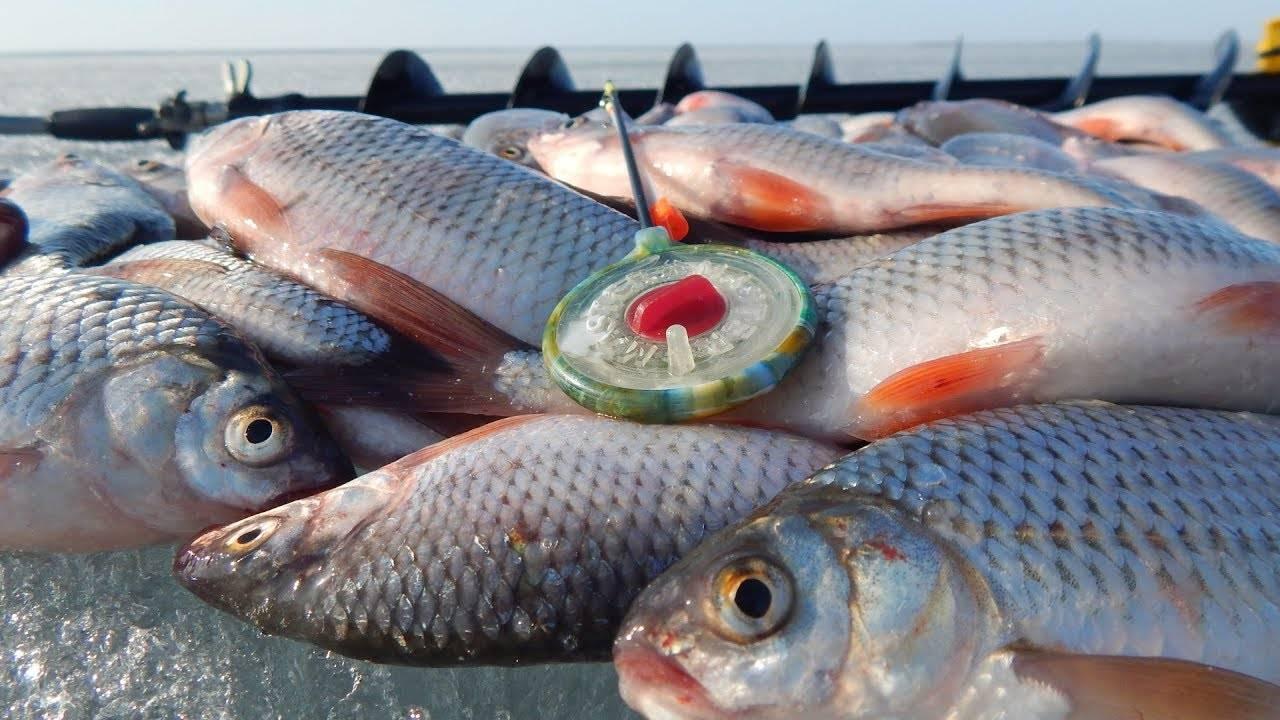 Рыбалка в барнауле и его окрестностях: на лосихе и на оби, на карповом озере и в других местах. где лучше рыбачить и ловить раков? отзывы
