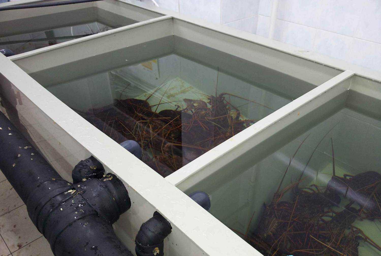 Крабы в аквариуме: виды аквариумных крабов, содержание с рыбками