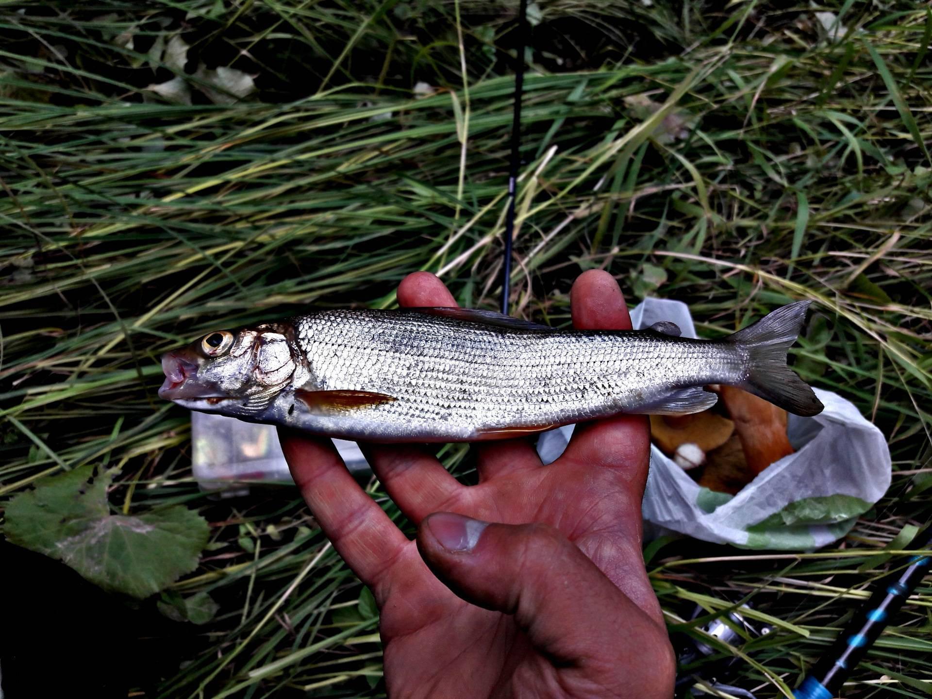 Река пышма свердловской области: особенности рыбалки, какая рыба водится