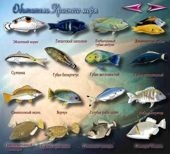Морская и речная рыба без костей