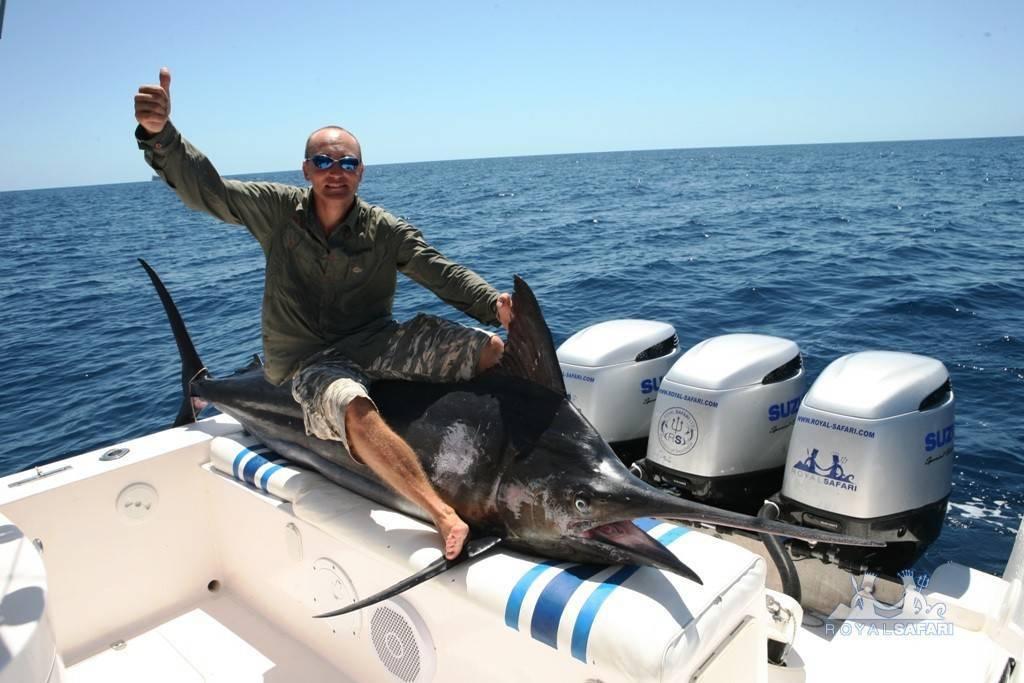Рыба марлин: чем полезна и чем вредна   польза и вред