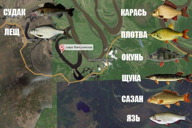Рыбалка в пруду кипень. рыболовный форум и отчеты на карте