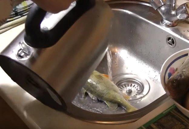 Как почистить окуня от чешуи: способы правильно и быстро чистить, видео