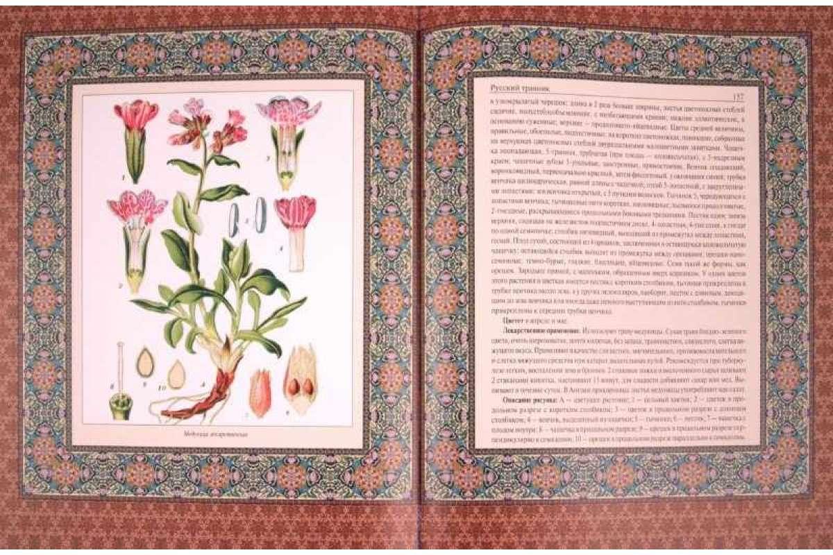 Аквариумные растения. фото с названиями для начинающих