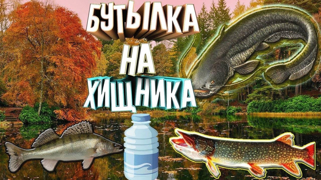 Как ловить осеннего судака не хуже щуки – что говорят бывалые рыбаки