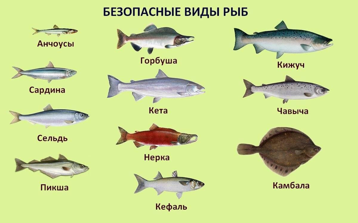 Морская и речная нежирная рыба: список сортов для диеты