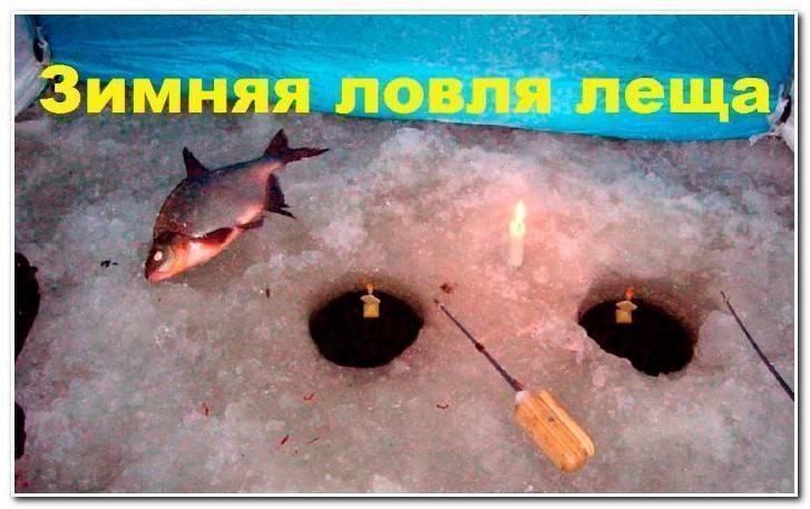 Рыбалка на леща зимой: где искать, чем и как ловить   советы рыбакам