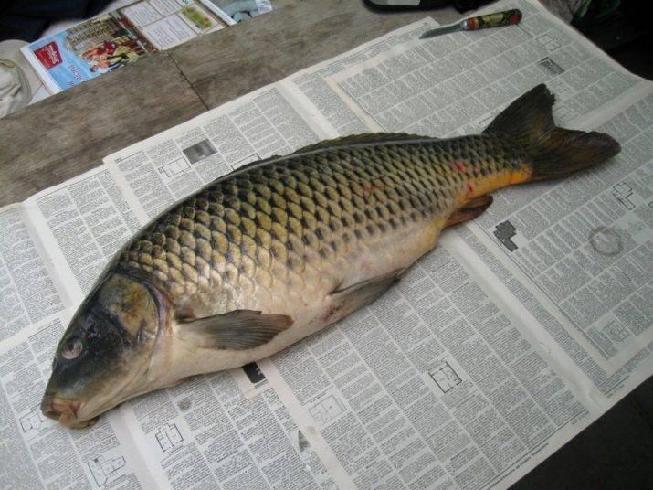 Рыба сазан? польза и вред, свойства икры для организма, состав