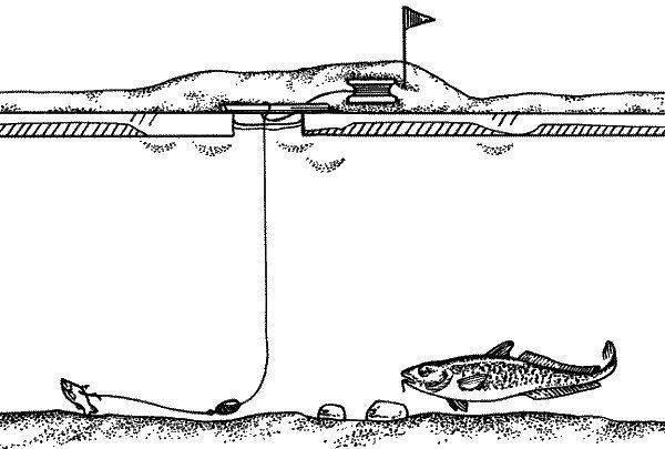 Ловля щуки на жерлицы зимой и летом – подробное руководство