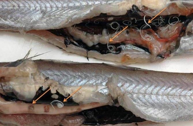 Рыба путассу: польза и вред, фото, как приготовить