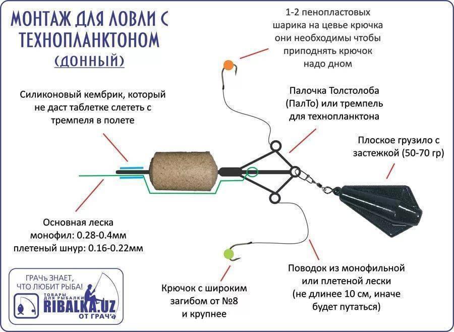 Ловля толстолобика на технопланктон: описание подходящей оснастки, рекомендации специалистов