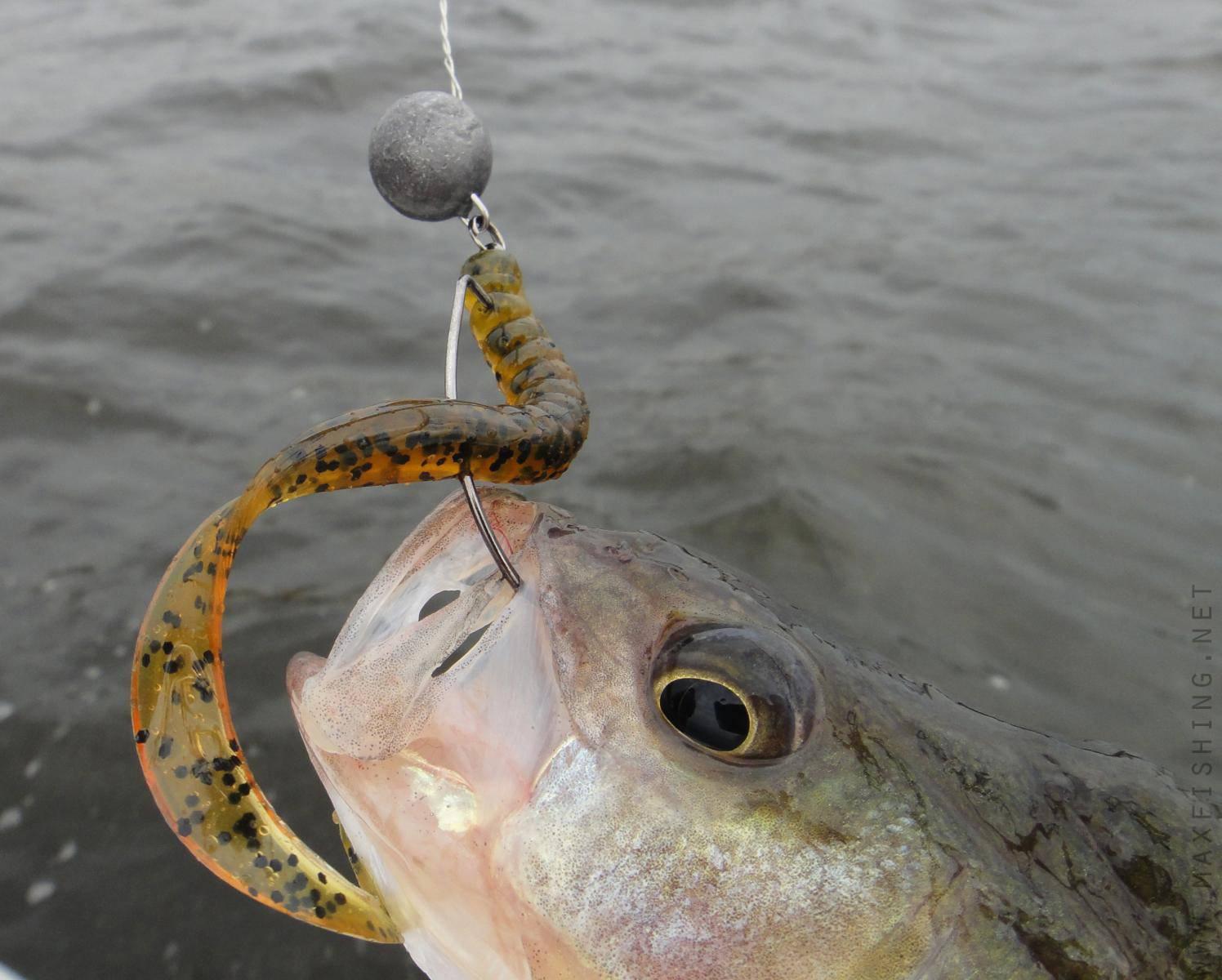 На что можно ловить рыбу, на какую приманку лучше клюет на реке или озере