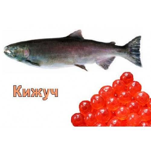 ✅ икра кеты, горбуши, нерки: в чём разница, какая крупнее, полезней и дороже, фото - tehnoyug.com