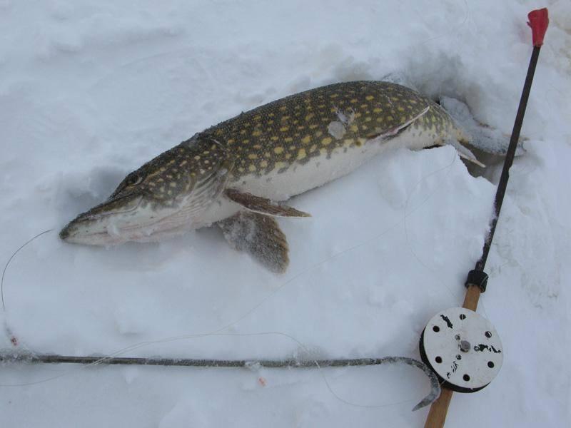 Ловля щуки зимой: где искать рыбу, снасти и тактика