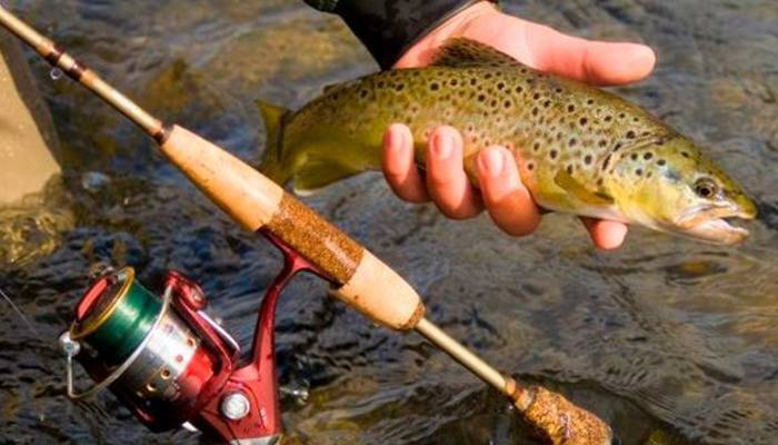 Как ловить форель на спиннинг на реках и платниках