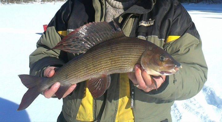 Платная рыбалка в кемеровской области —обзор водоемов, услуги и цены