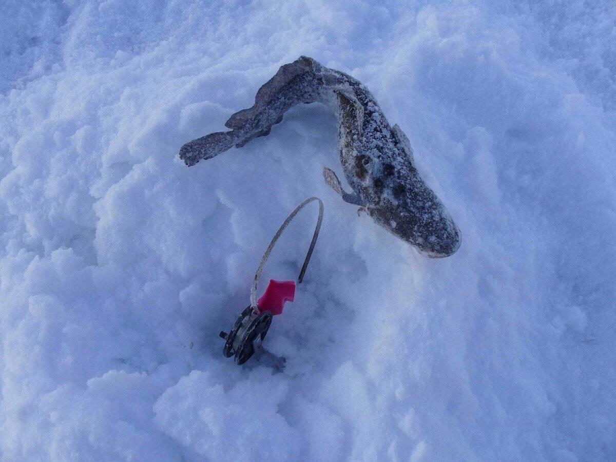 Ловля налима зимой на жерлицы: как избежать основных ошибок