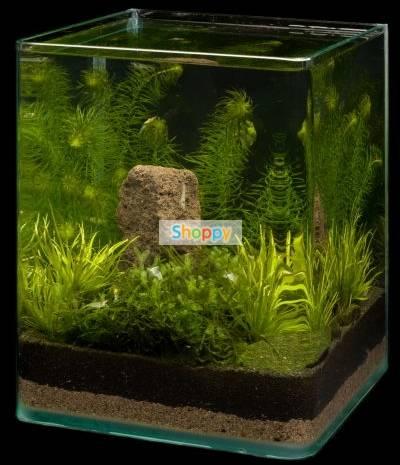 Пошаговый запуск нового аквариума – с чего начать?