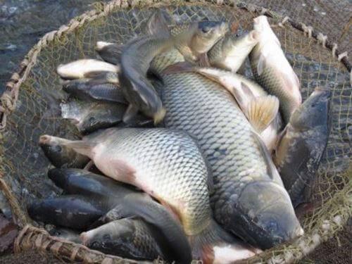 ✅ рыбалка в домодедово платная - рыбзон.рф