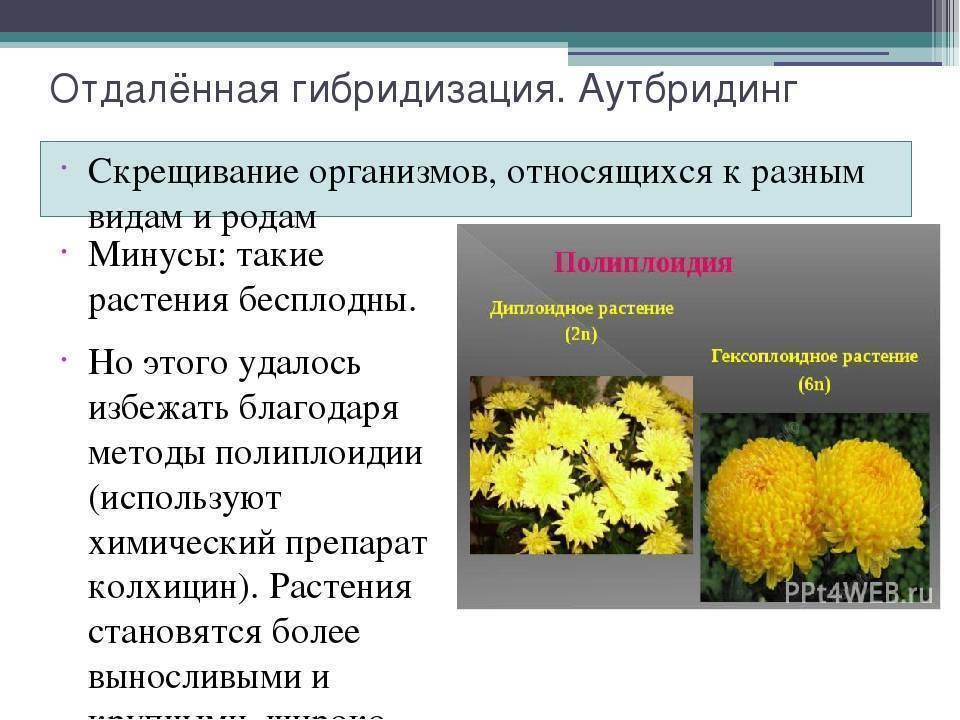 Рыбалка на дону в ростовской области | рыбалка на дону