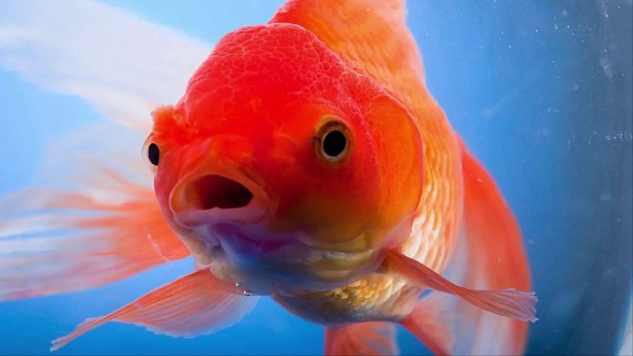 Память как у рыбки: есть ли, какая и сколько длится секунд