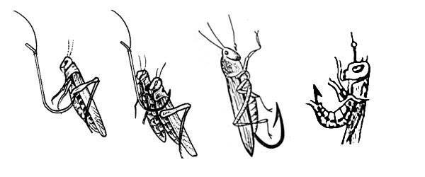 Как избавиться от личинок майского жука - препараты и народные методы