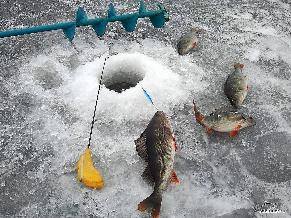 Ловля окуня по первому льду: весь процесс в подробностях от профи