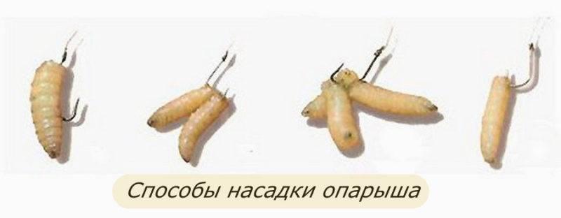 Как правильно насаживать опарыша на крючок: способы насадки, выбор крючка