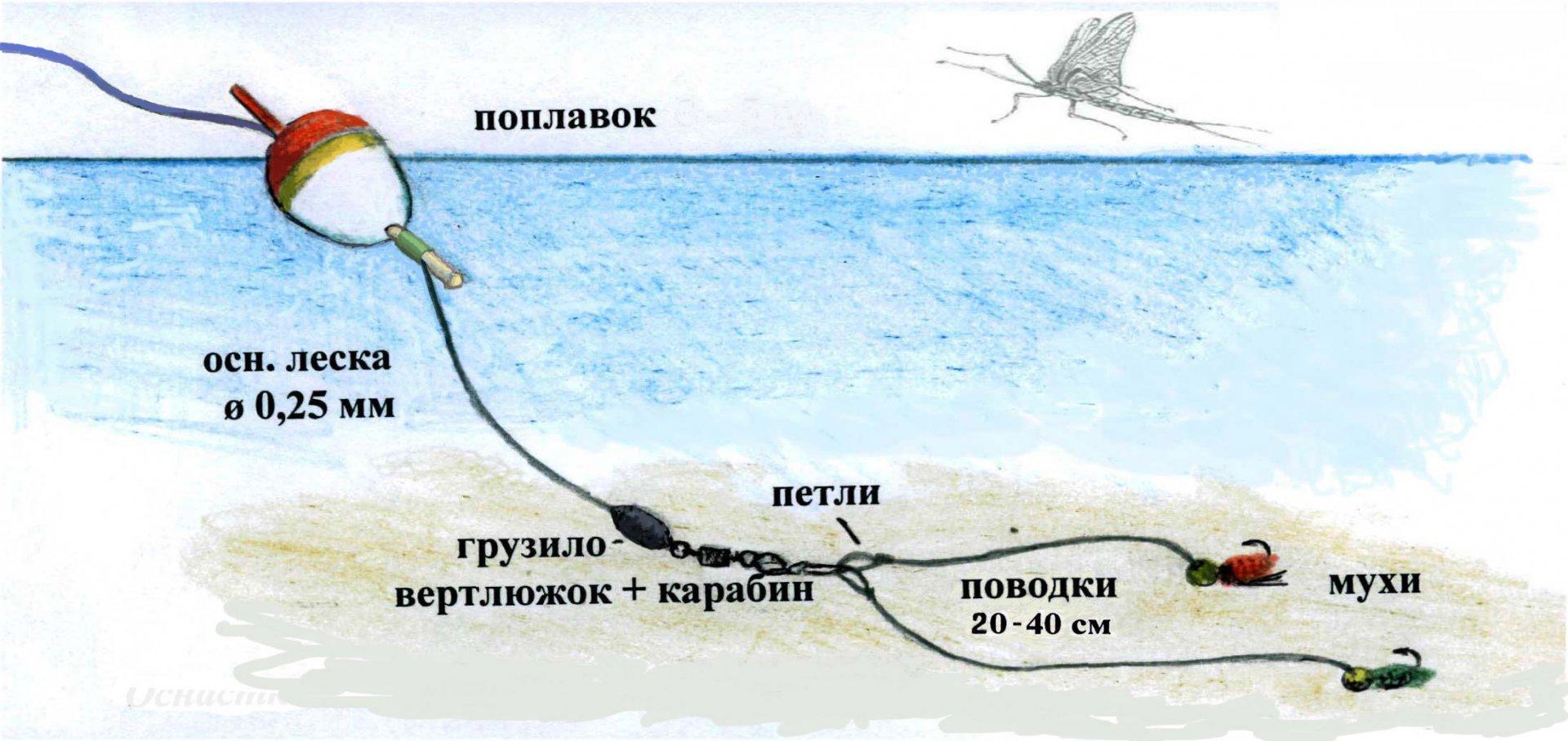 Ловля хариуса зимой: на малых и средних реках