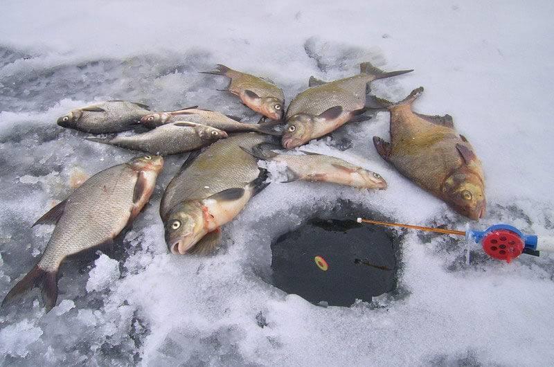 Техника ловли леща на мормышку зимой: правильная оснастка и прикормка
