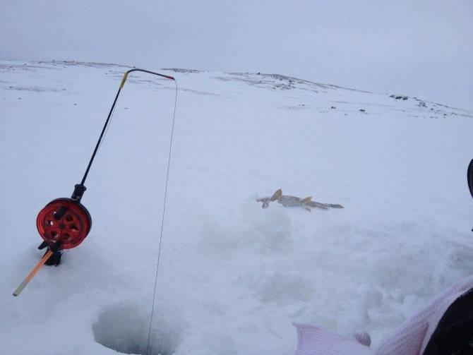 Зимняя рыбалка видео. смотреть видео про зимнюю рыбалку