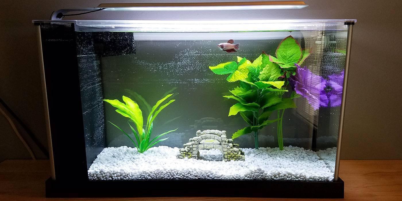 Пошаговая инструкция по запуску аквариума с нуля: место, грунт, вода, рыбки