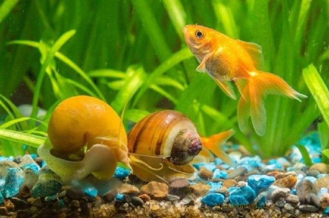 Как проверить уровень ph в аквариуме: 9 шагов