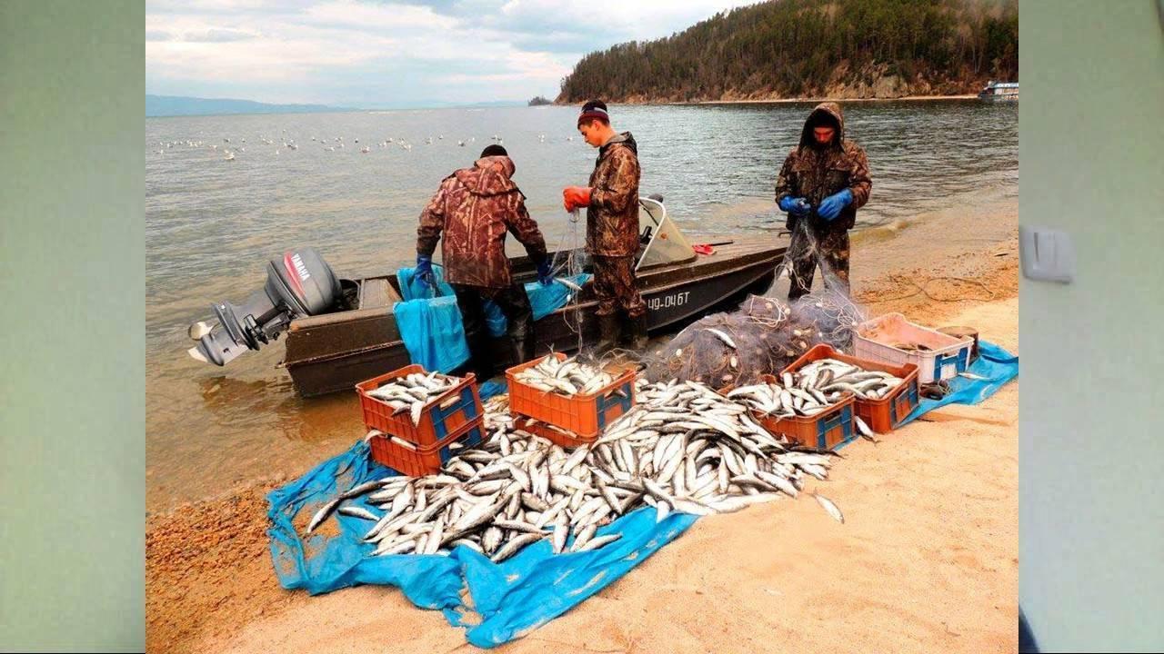 Рыбы байкала. описание, особенности, названия и фото видов рыбы в байкале. статья подробно расскажет о видах рыбы в озере байкал, её особенностях и образе жизни
