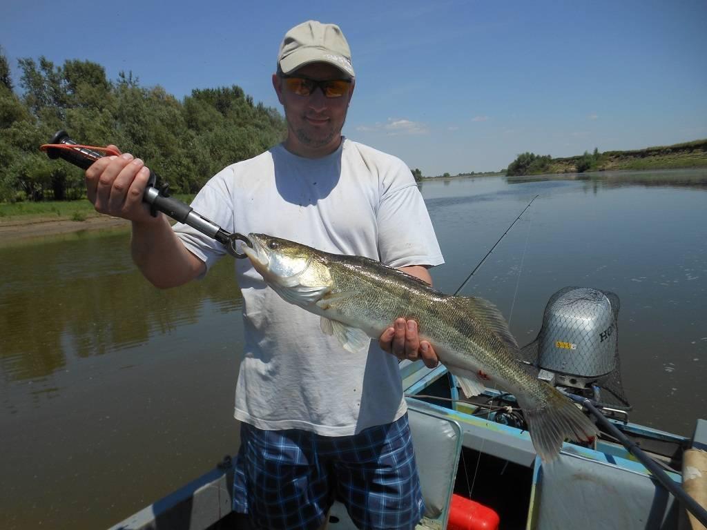 Способы сохранить рыбу при длительной рыбалке в жару