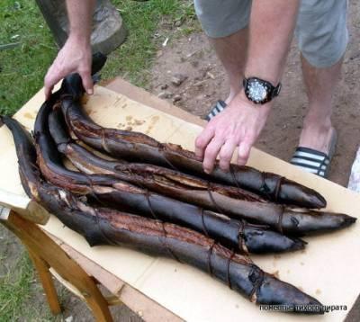 Угорь. ловля угря - мир улова - рыбалка, сайт о рыбалке