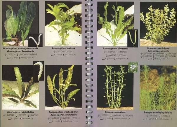 Неприхотливые аквариумные растения (21 фото): популярные растения для аквариума с названиями и описанием, самые подходящие виды для начинающих