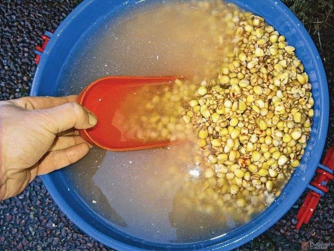 Ловля карпа на кукурузу: как насаживать на крючок, приготовление ферментированной кукурузы, рецепты