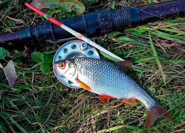 Рыбалка на поплавочную удочку: снасти, оснастка, приманки, места ловли