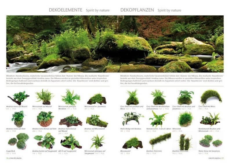 Аквариумные растения с названиями и описанием (41 фото): виды водорослей в аквариуме для начинающих, сагиттария и марсилия, кринум и лимнобиум