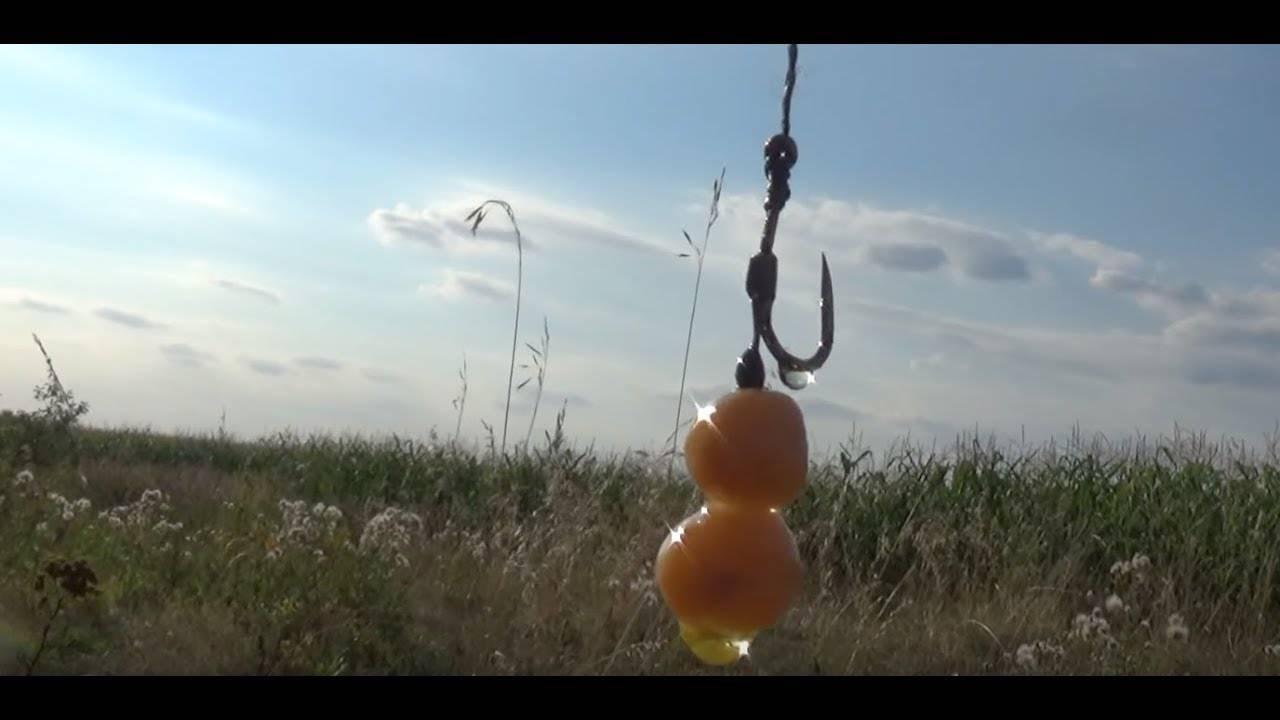 Рыбалка на карпа – видео обзор способов ловли